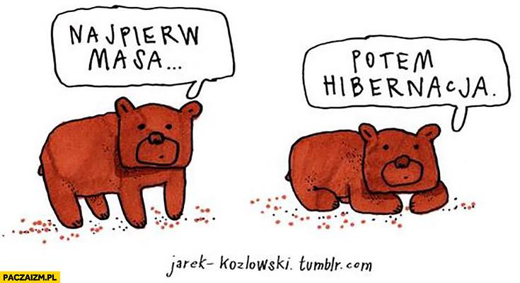 Najpierw masa potem hibernacja miś niedźwiedź Jarek Kozłowski