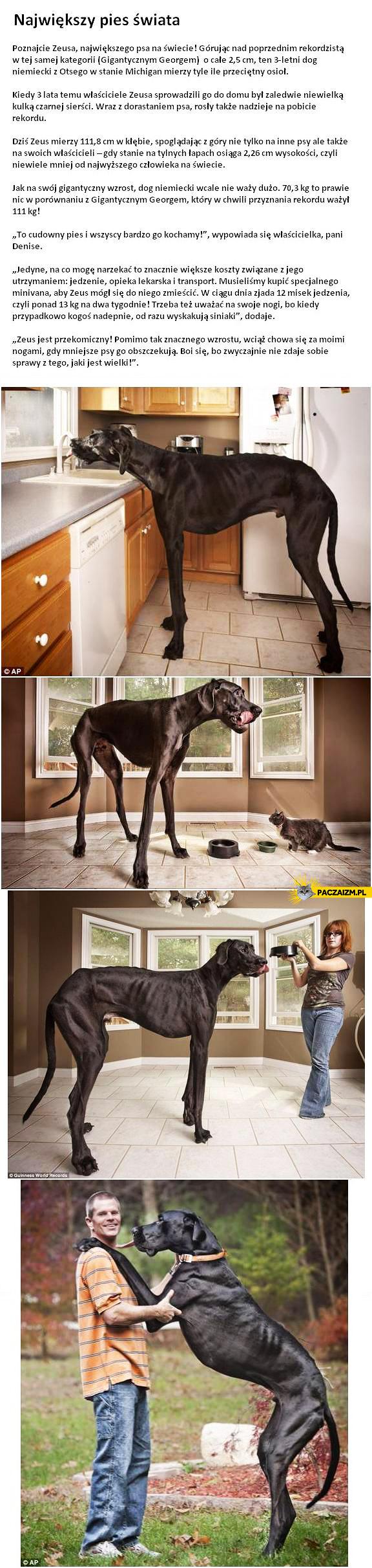 Największy pies świata