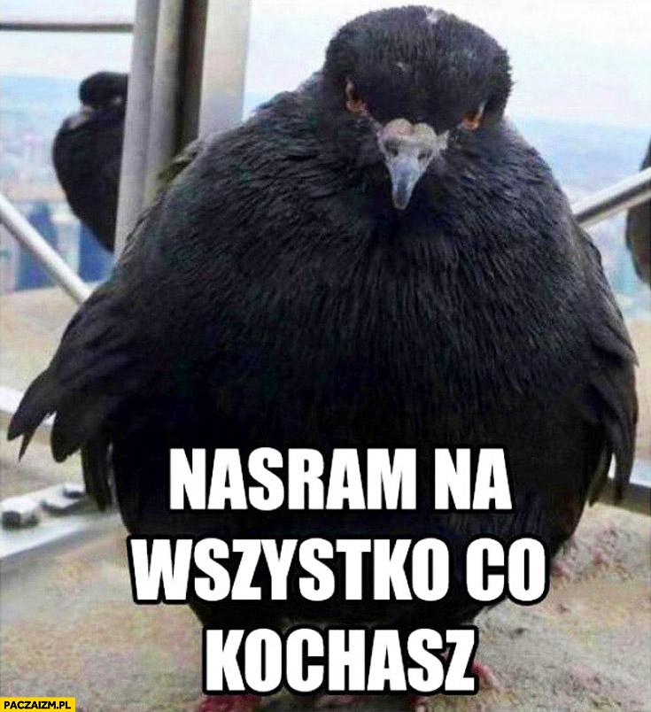 Nasram na wszystko co kochasz ptak
