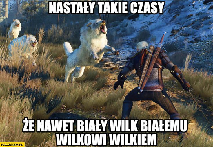 Nastały takie czasy, że nawet biały wilk białemu wilkowi wilkiem. Wiedźmin