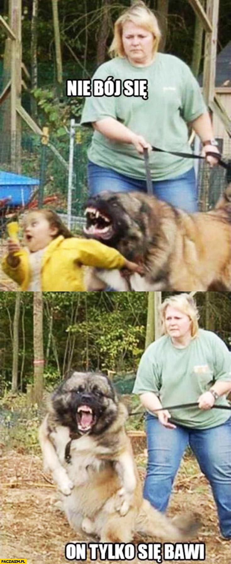 Nie bój się on tylko się bawi zły pies