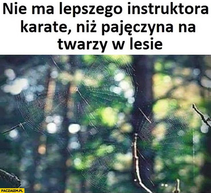 Nie ma lepszego instruktora karate niż pajęczyna na twarzy w lesie