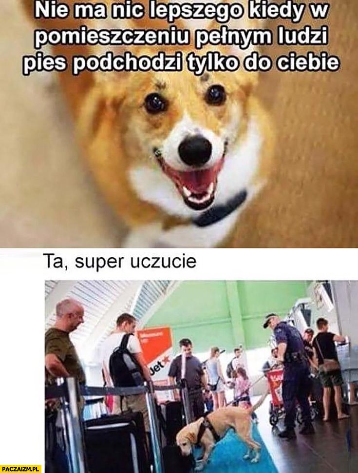 Nie ma nic lepszego kiedy w pomieszczeniu pełnym ludzi pies podchodzi tylko do Ciebie ta super uczucie na lotnisku narkotyki