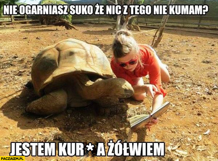 Nie ogarniasz że nic z tego nie kumam jestem żółwiem