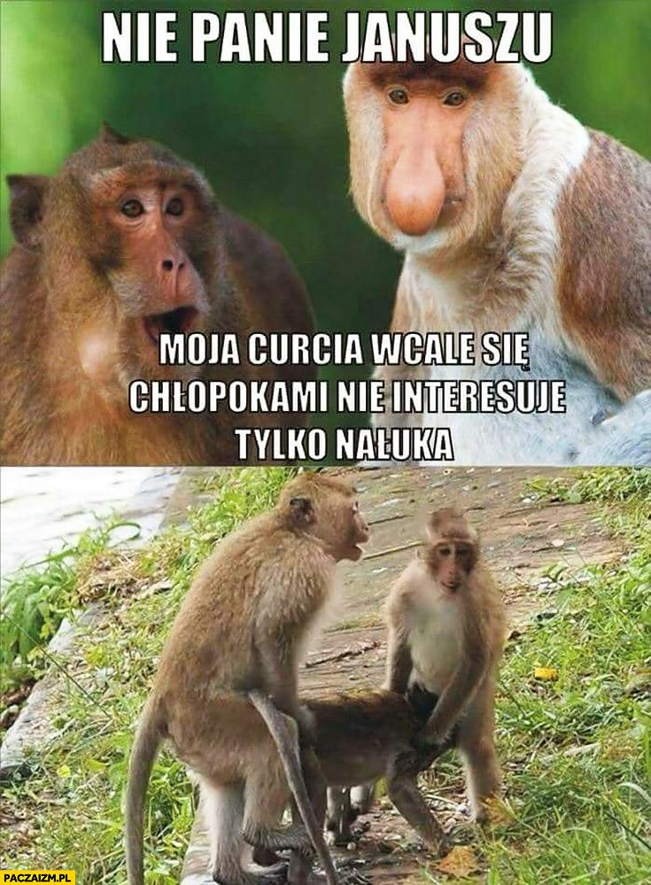 Nie panie Januszu, moja córcia wcale się chłopakami nie interesuje tylko nauka typowy Polak nosacz małpa