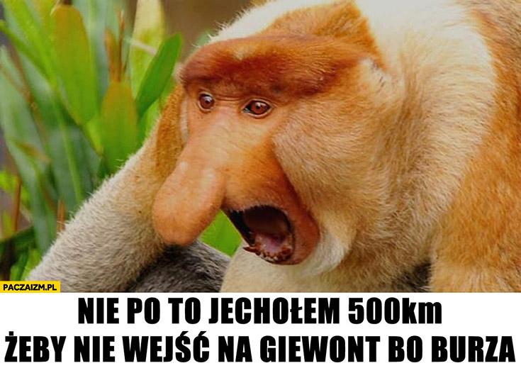 Nie po to jechałem 500 km żeby nie wejść na Giewont bo burza typowy Polak nosacz małpa