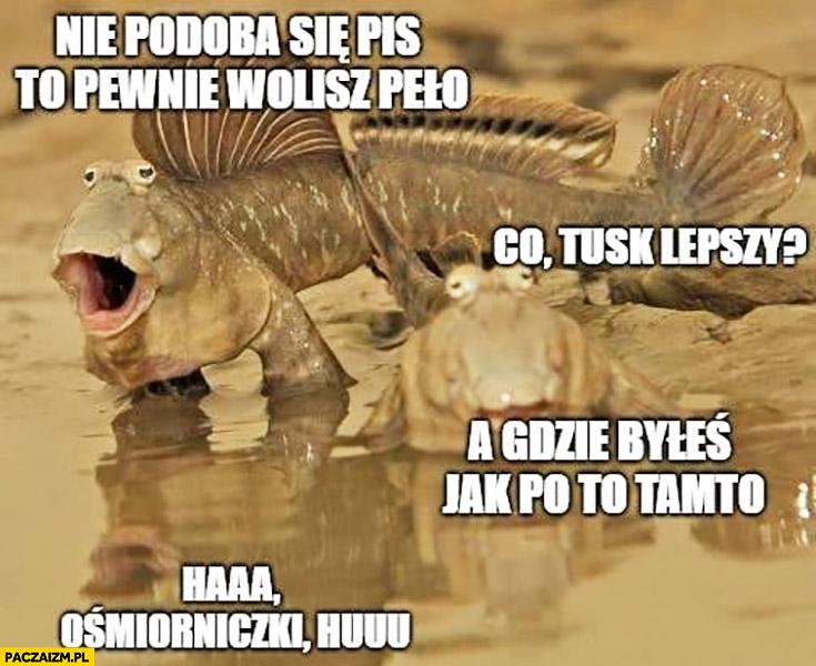 Nie podoba się PiS to pewnie wolisz PO, co Tusk lepszy? G gdzie byłeś jak PO to tamto ośmiorniczki