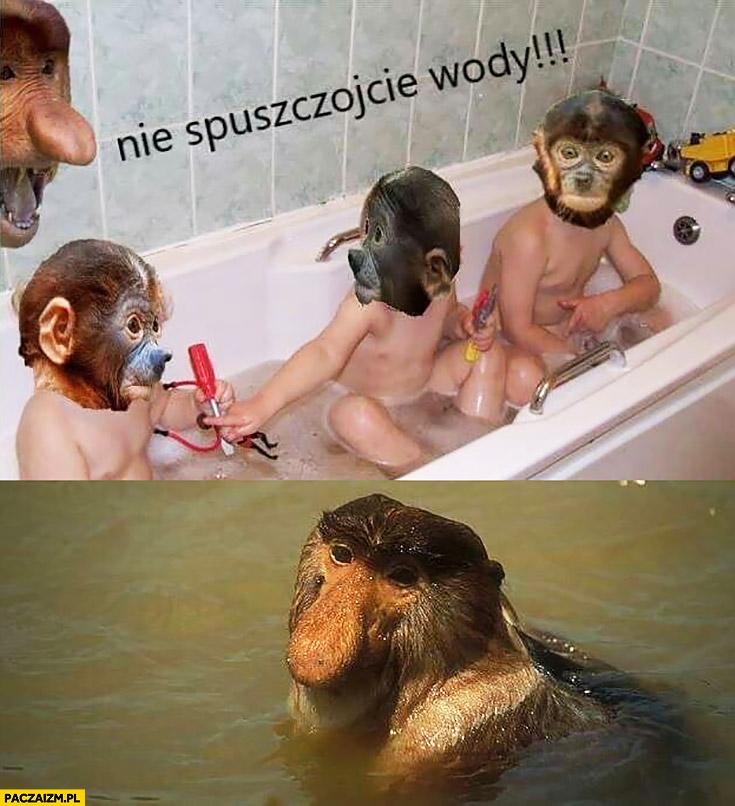 Nie spuszczajcie wody kąpie się po dzieciach typowy Polak nosacz małpa
