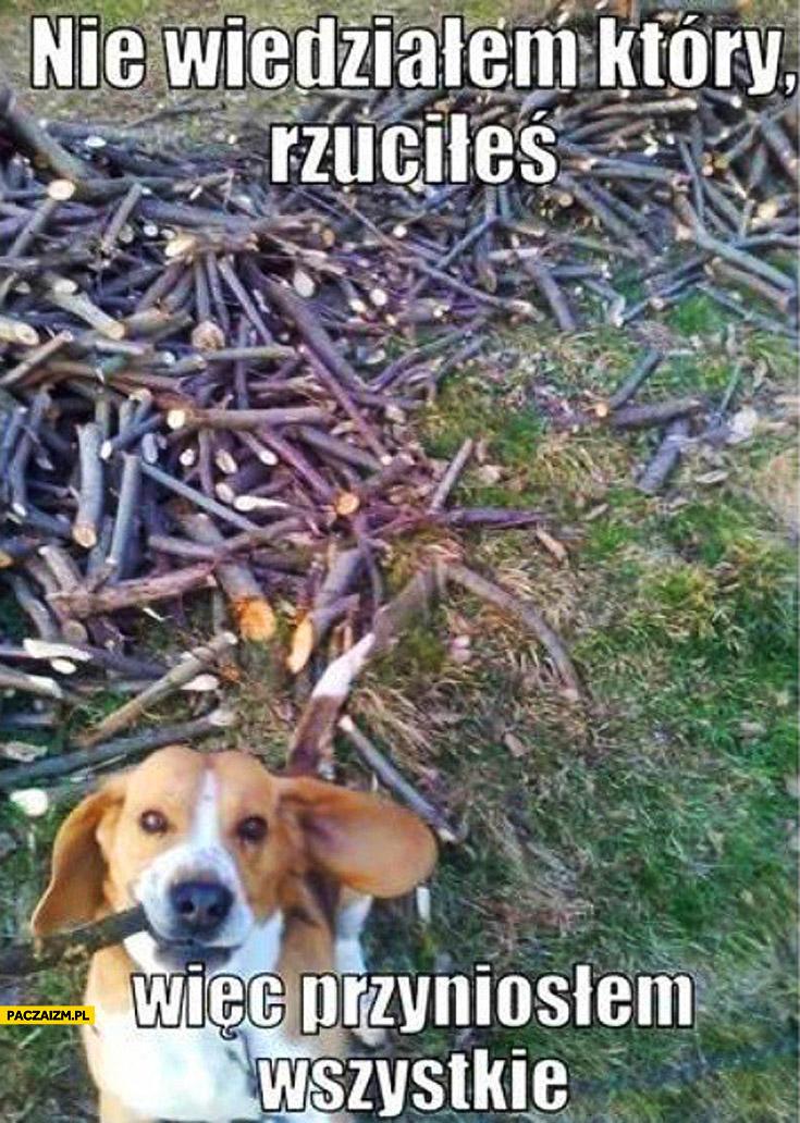 Nie widziałem który rzuciłeś więc przyniosłem wszystkie patyki pies aport