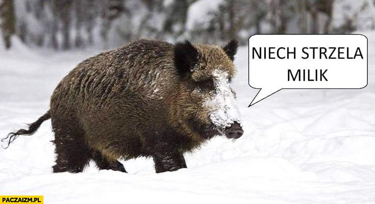 niech-strzela-milik-dzik-odstrzal-dzikow