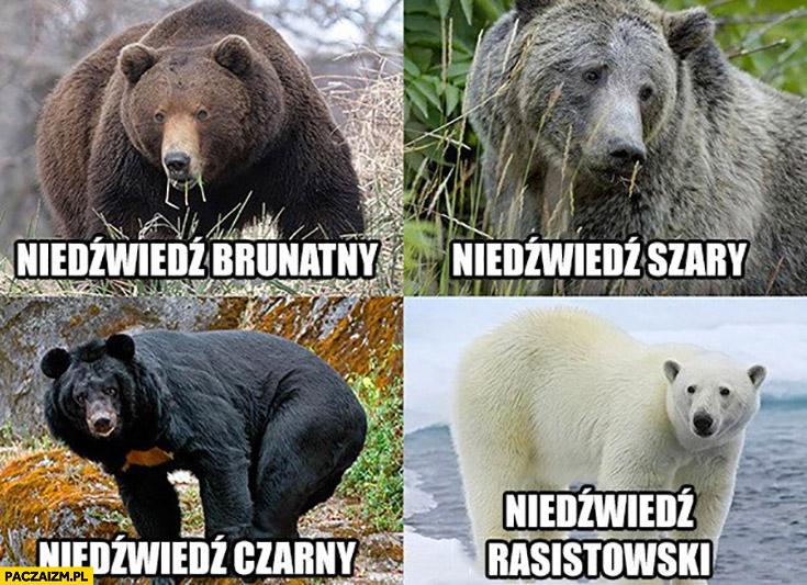 Niedźwiedź brunatny, czarny, szary, biały rasistowski