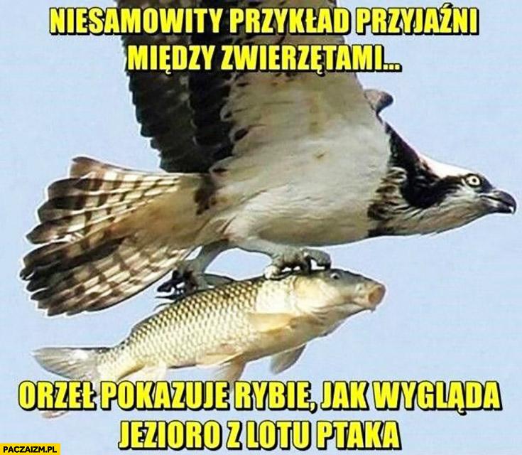 Niesamowity przykład przyjaźni między zwierzętami orzeł pokazuje rybie jak wygląda jezioro z lotu ptaka