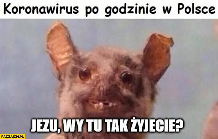 Nietoperz koronawirus po godzinie w Polsce: Jezu wy tu tak żyjecie?