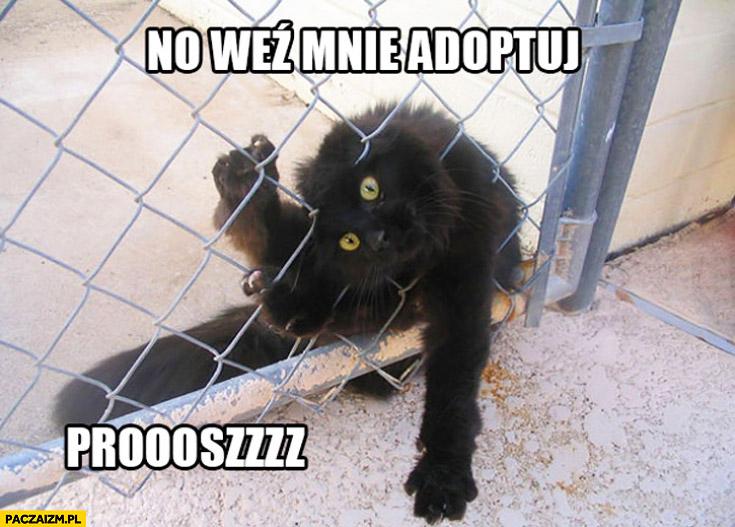 No weź mnie adoptuj proszę kot za siatką