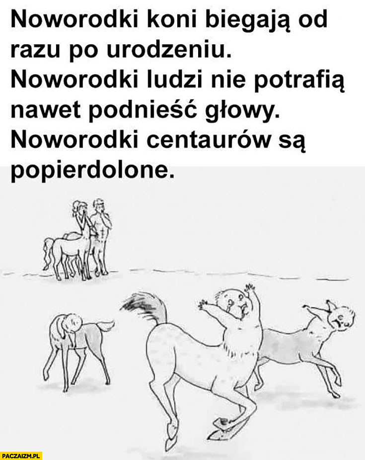 Noworodki koni biegają od razu po urodzeniu, noworodki ludzi nie potrafią nawet podnieść głowy, noworodki centaurów są popierdzielone