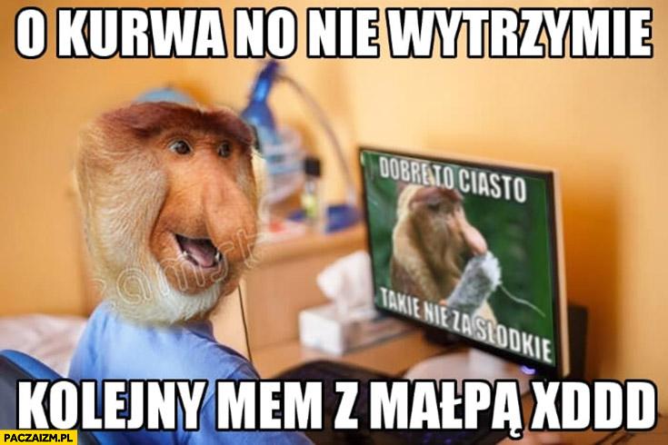 O kurna no nie wytrzymie kolejny mem z małpą typowy Polak nosacz małpa