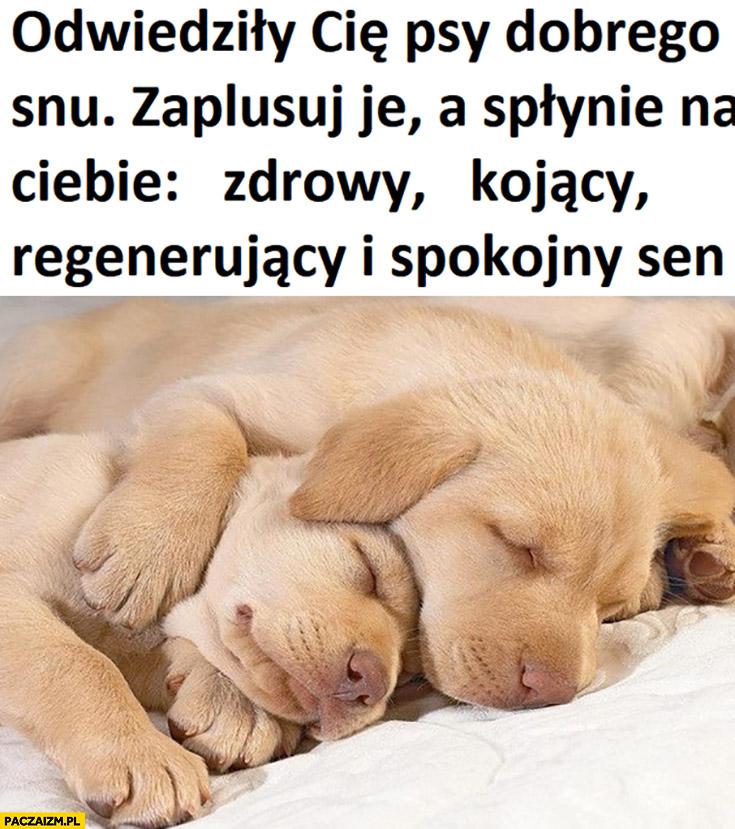 Odwiedziły Cię psy dobrego snu zaplusuj je a spłynie na ciebie zdrowy, kojący, regenerujący i spokojny sen