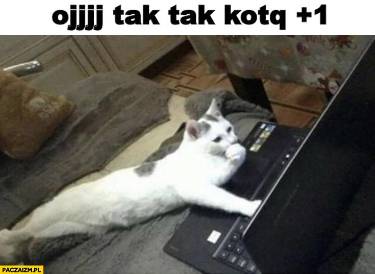 Oj tak tak kotku plus 1 kot przy komputerze laptopie