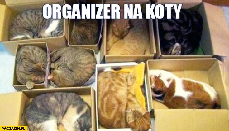 Organizer na koty pudełka