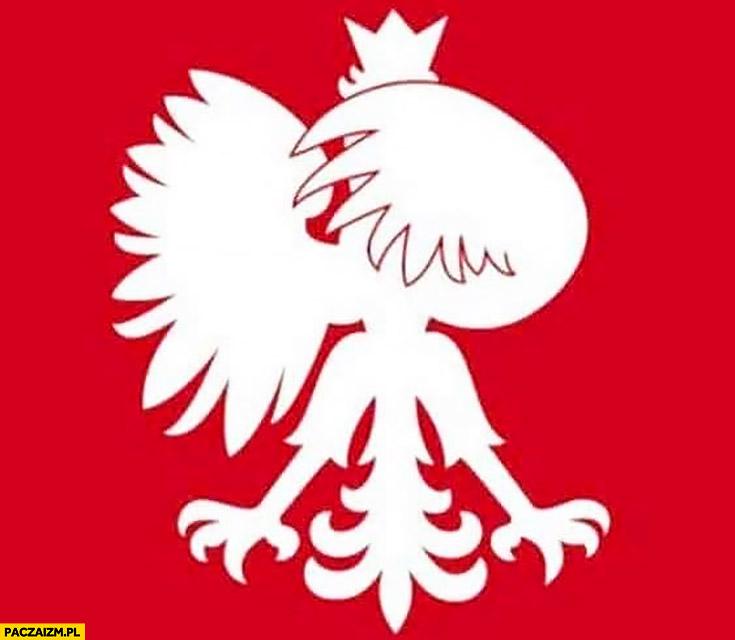 Orzełek godło polski zamyka oczy ze wstydu zakrywa twarz skrzydłem
