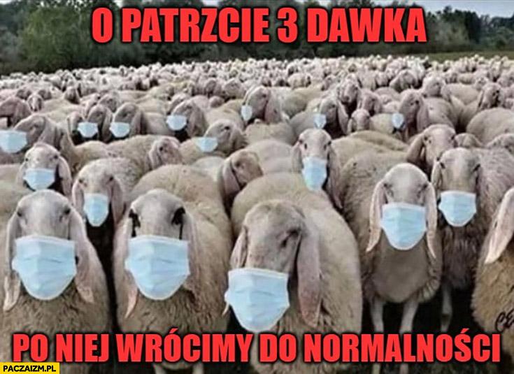 Owce barany o patrzcie 3 dawka szczepionki po niej wrócimy do normalności