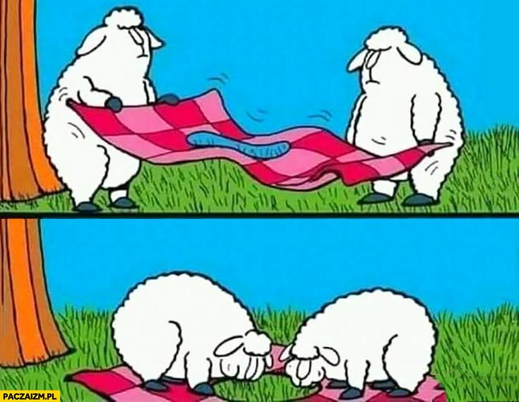 Owce na pikniku koc z dziura na jedzenie