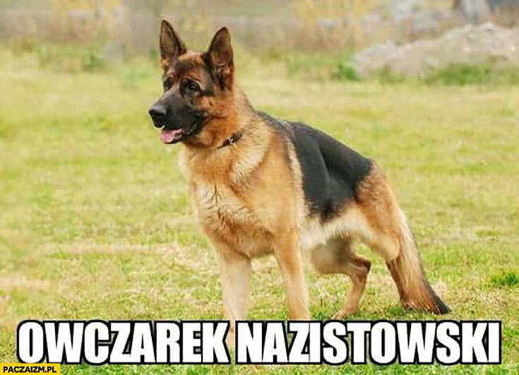 Owczarek nazistowski niemiecki