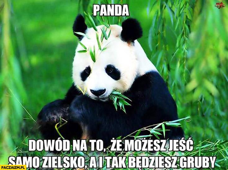 Panda dowód na to że możesz jeść samo zielsko a i tak będziesz gruby