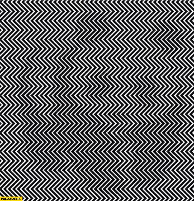 Panda widoczna ukryta iluzja efekt optyczny