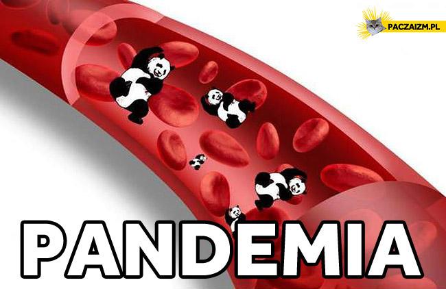 Pandemia krwinki