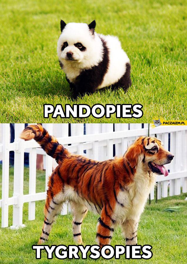 Pandopies tygrysopies
