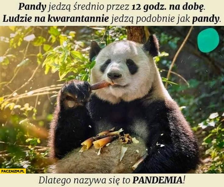 Pandy jedzą średnio przez 12 godzin na dobę, ludzie na kwarantannie jedzą podobnie jak pandy dlatego nazywa się to pandemia