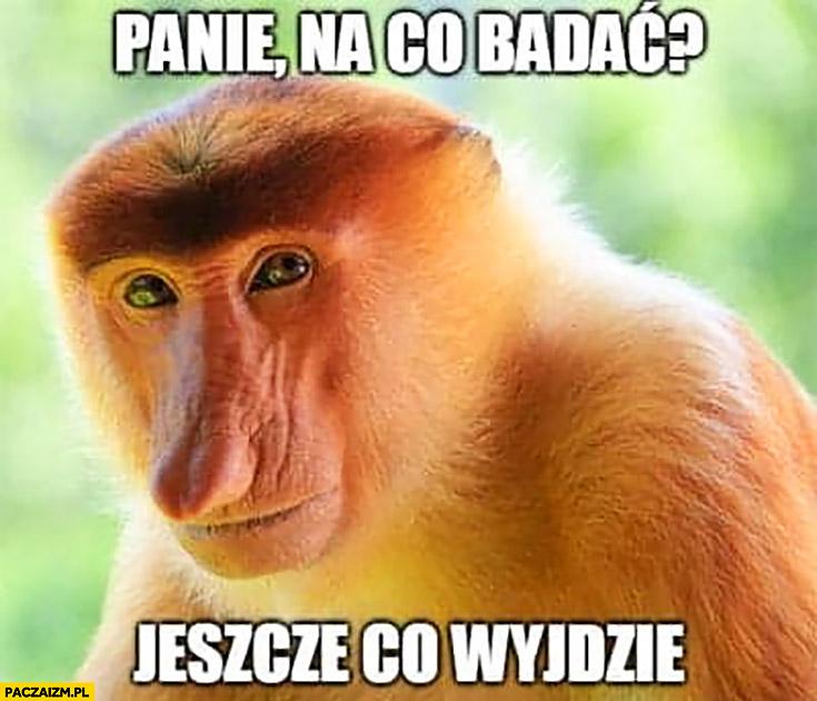 Panie na co badać jeszcze co wyjdzie typowy Polak nosacz małpa