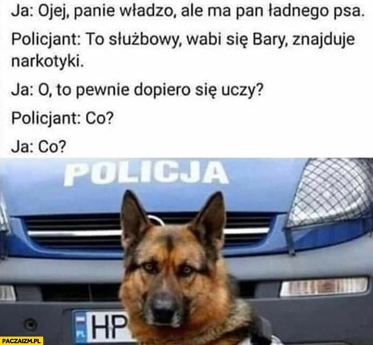 Panie władzo ma pan ładnego psa, to służbowy znajduje narkotyki, pewnie dopiero się uczy, co?
