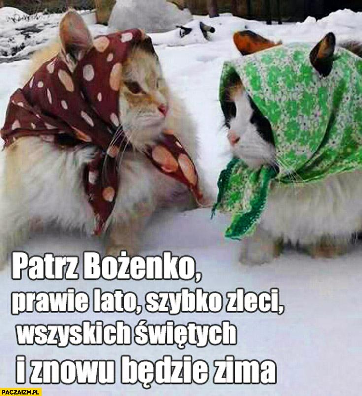 Patrz Bożenko prawie lato szybko zleci Wszystkich Świętych i znowu będzie zima koty