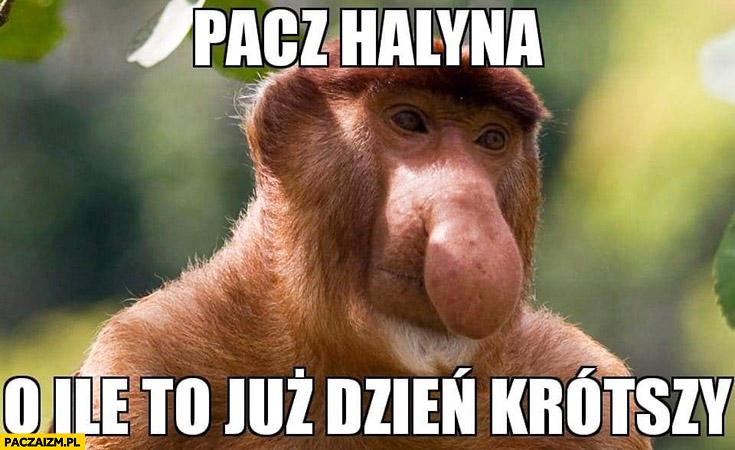 Patrz Halina o ile to już dzień krótszy typowy Polak nosacz małpa