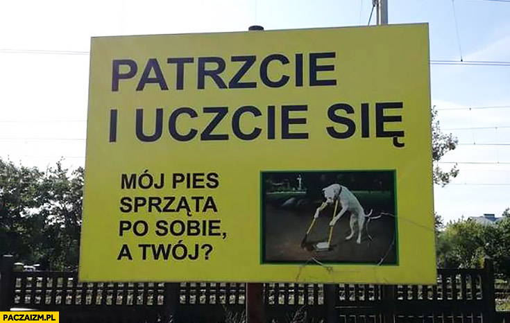 Patrzcie i uczcie się mój pies sprząta po sobie a Twój?