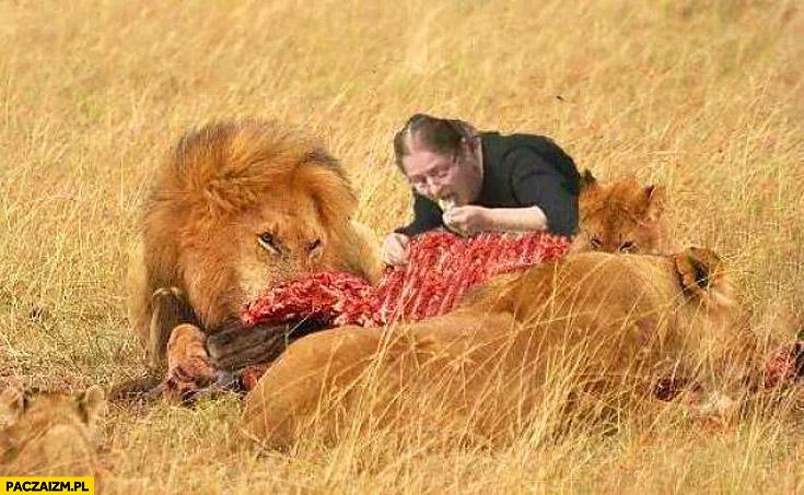 Pawłowicz lew żarcie
