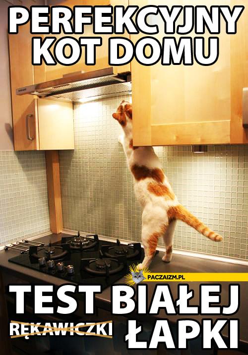 Perfekcyjny kot domu – test białej łapki