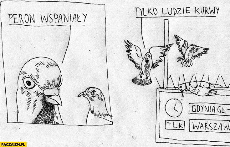Peron wspaniały tylko ludzie kurny gołębie