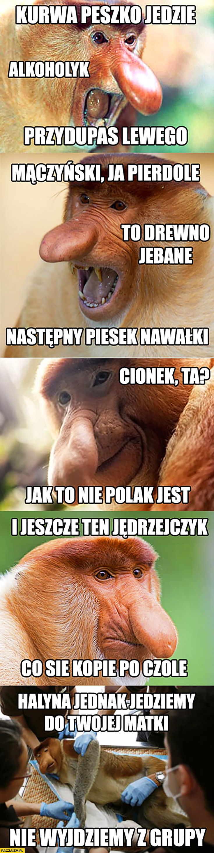 Peszko alkoholik przydupas Lewego, Mączyński drewno następny piesek Nawałki, Cionek to nie Polak jest, Jędrzejczyk co się kopie po czole typowy Polak nosacz małpa o reprezentacji