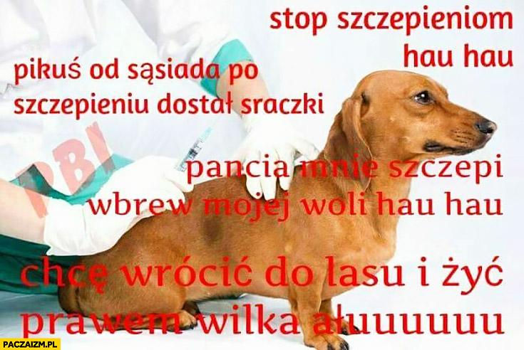 Pies antyszczepionkowiec stop szczepieniu, Pikuś po szczepieniu dostał sraczki, pancia mnie nie szczepi, chcę wrócić do lasu i żyć prawem wilka