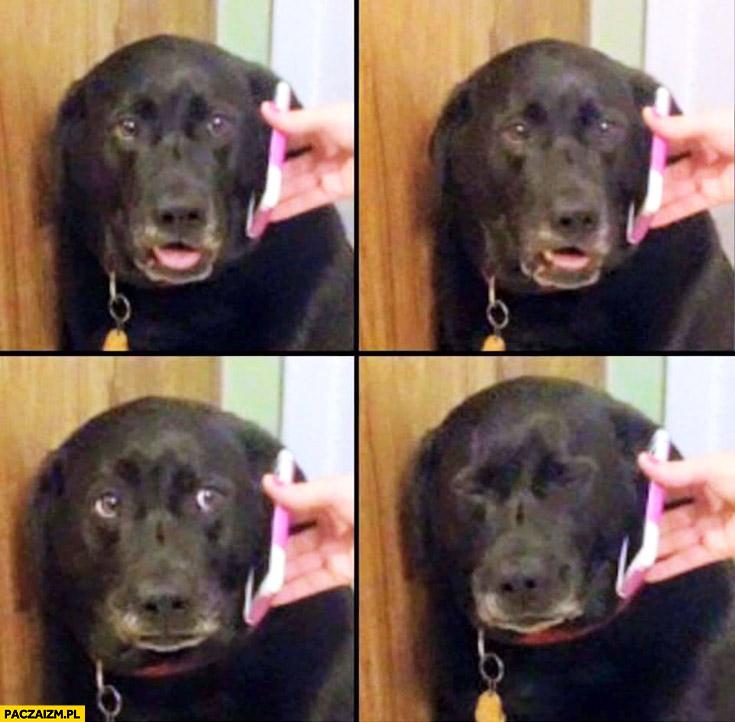 Pies dostaje złą wiadomość przez telefon robi się smutny