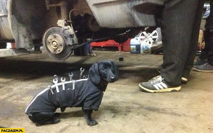 Pies jamnik pomocnik mechanika kieszenie na narzędzia