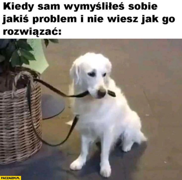 Pies kiedy sam wymyśliłeś sobie jakiś problem i nie wiesz jak go rozwiązać