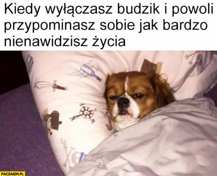 Pies kiedy wyłączasz budzik i powoli przypominasz sobie jak bardzo nienawidzisz życia