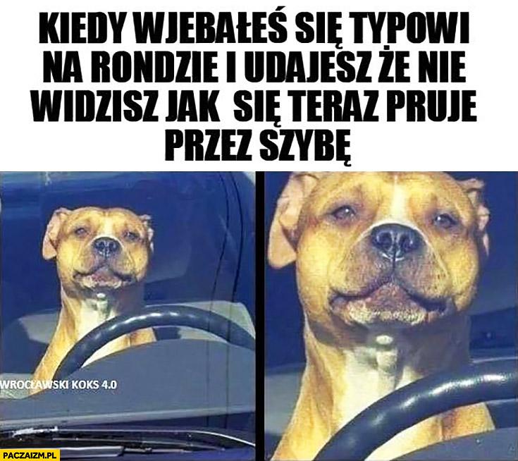 Pies kierowca kiedy wjechałeś typowi na rondzie i udajesz, że nie widzisz jak się teraz pruje przez szybę