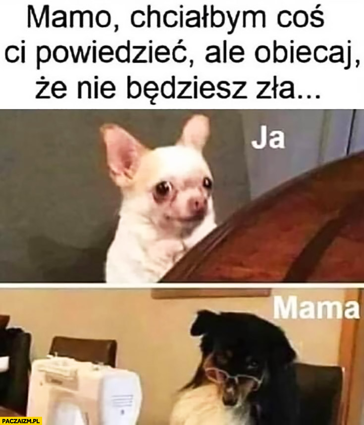Pies mamo chciałbym coś Ci powiedzieć ale obiecaj, że nie będziesz zła mama patrzy