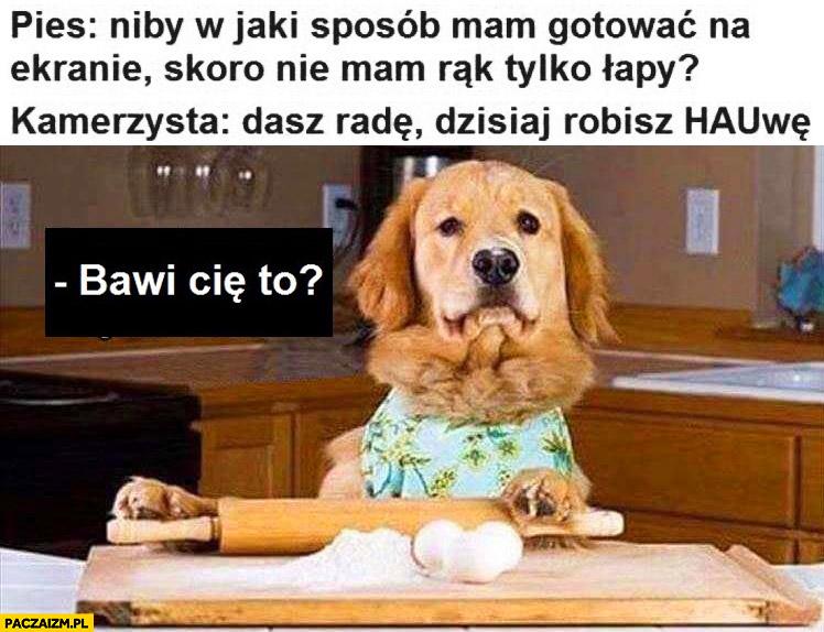 Pies niby w jaki sposób mam gotować na ekranie skoro nie mam rąk tylko łapy? Kamerzysta: dasz radę, dzisiaj robisz hauwę. Bawi Cię to?
