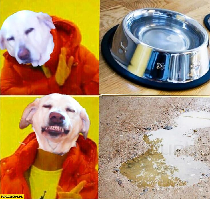 Pies nie chce wody z miski woli wodę z kałuży Drake